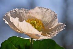 цветок детали Стоковое Фото