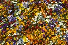 цветок дисплея colorul Стоковая Фотография RF