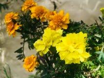 Цветок для каждый природа влюбленности Стоковое Фото