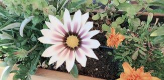 Цветок для красивого и солнечного стоковое фото