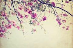 цветок дерева в лете, бумажной текстуре искусства Стоковое Изображение