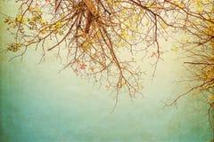 цветок дерева в лете Стоковое Изображение RF