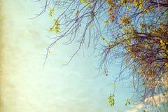 цветок дерева в лете Стоковая Фотография