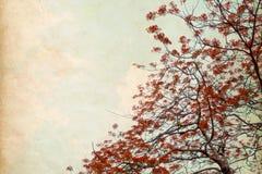Цветок дерева красный в лете Стоковые Изображения