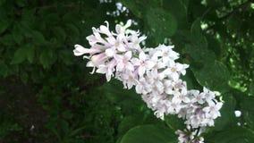 цветок дерева на предпосылке листвы Стоковые Изображения RF