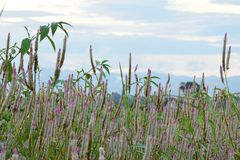 Цветок леса Стоковое фото RF