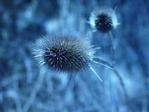 Цветок леса Стоковые Изображения