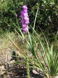 Цветок леса Стоковые Изображения RF