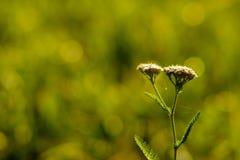 цветок детали одичалый Стоковые Изображения