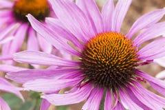 Цветок лета Стоковое Изображение RF