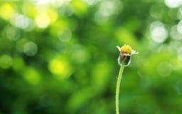 Цветок лета Стоковые Изображения
