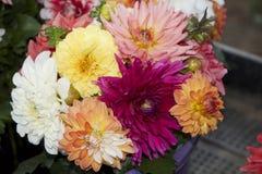 Цветок лета стоковая фотография