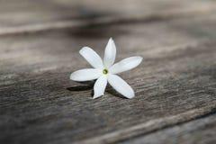 Цветок жасмина Азорских островов на деревянном столе Стоковое Изображение RF
