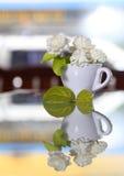 Цветок жасмина (на день матери Таиланда) Стоковая Фотография RF