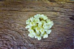 Цветок жасмина на старой деревянной предпосылке Стоковые Изображения