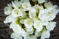Цветок жасмина на старой деревянной предпосылке Стоковое Изображение
