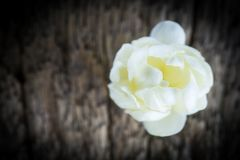 Цветок жасмина на старой деревянной предпосылке Стоковые Изображения RF