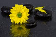 Цветок желтого цвета принципиальной схемы спы с камнями спы Стоковые Изображения RF