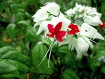 Цветок жемчуга, convolve стоковое фото rf