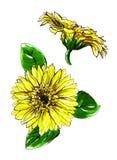 Цветок желтого цвета маргаритки Gerbera Стоковое Фото
