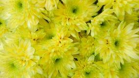 Цветок, желтый цвет Стоковое фото RF