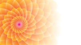 цветок Желт-апельсина на предпосылке Уайта Стоковые Фото