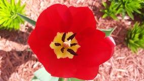 цветок живой Стоковые Фото