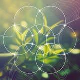 Цветок жизни - блокировать объезжает старый символ перед запачканной photorealistic предпосылкой природы священнейше Стоковые Изображения