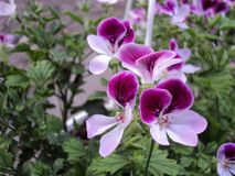 цветок завода с 2 лепестками цвета яркими Стоковое Фото