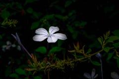Цветок загоренный с вспышкой стоковое изображение