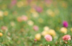цветок запачканный предпосылкой Стоковое Изображение