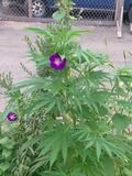 Цветок засорителя? стоковое фото rf