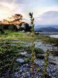 Цветок захода солнца Стоковые Фото