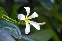 Цветок зацветая далеко от дерева стоковые изображения rf