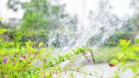 Цветок зацветая фронт фонтана ` s пруда в саде сток-видео