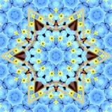 Цветок звезды сатинировки Стоковые Фотографии RF