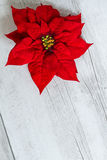 Цветок звезды рождества Стоковое фото RF