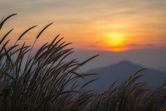 Цветок зеленой травы во время предпосылки захода солнца Стоковое фото RF