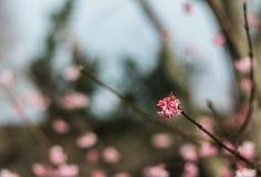 цветок зимы Стоковая Фотография