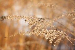 цветок зимы Стоковое Изображение