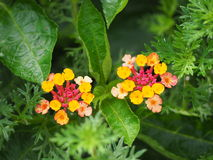 Цветок изгороди Стоковое Фото