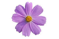 цветок изолировал путь Стоковые Изображения RF