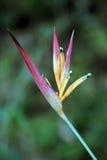 Цветок длиннохвостого попугая на темном лесе Стоковые Изображения RF