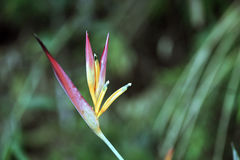 Цветок длиннохвостого попугая на темном лесе Стоковые Изображения