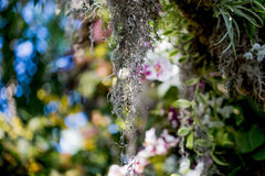Цветок лист дерева мха стоковые изображения rf