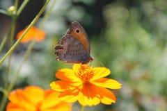 Цветок и бабочка Стоковые Фотографии RF