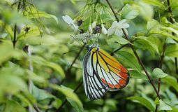 Цветок и бабочка 106 Стоковое Фото