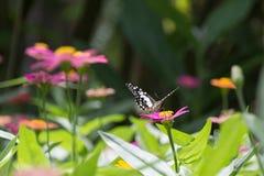 Цветок и бабочка Стоковое фото RF