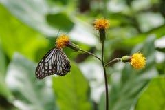 Цветок и бабочка Стоковая Фотография RF