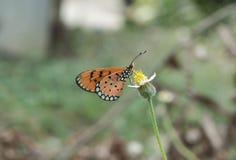 Цветок и бабочка Стоковая Фотография